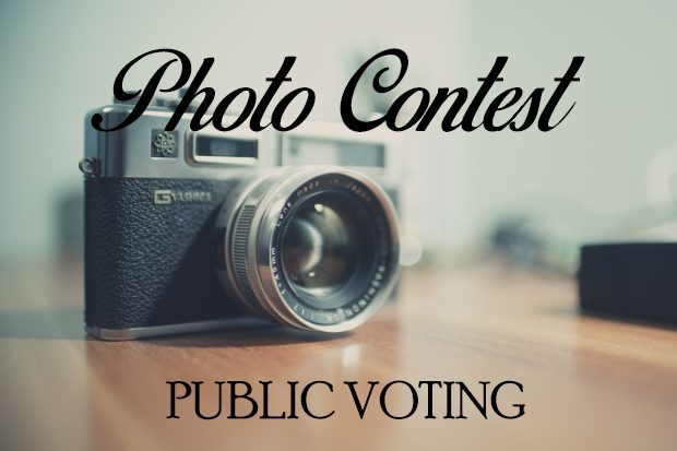 Photo Contest Public Voting